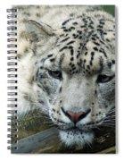 Portrait Of A Snow Leopard Spiral Notebook