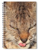 Portrait Of A Young Bob Cat 02 Spiral Notebook