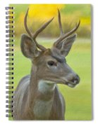 Portrait Of A Young Buck Spiral Notebook