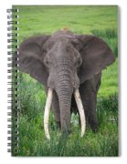 Portrait Of African Elephant Loxodonta Spiral Notebook
