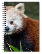 Portrait Of Cini The Red Panda Spiral Notebook