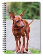Portrait Of Red Miniature Pinscher Dog Spiral Notebook