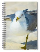 Pose For The Camera  Spiral Notebook