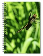Posing Dragonfly 2 Spiral Notebook