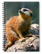 Posing Meerkat Spiral Notebook