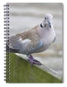 Posing On The Fence Spiral Notebook
