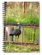 Posing Peahen Spiral Notebook