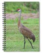 Posing Sandhill Spiral Notebook