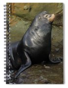 Posing Sea Lion Spiral Notebook