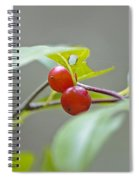 Possum Haw Berries Spiral Notebook