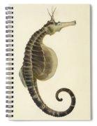 Pot Bellied Seahorse. Hippocampus Abdominalis Spiral Notebook