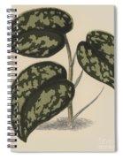 Pothos Argyraea Spiral Notebook