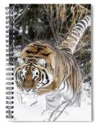 Pounced Spiral Notebook