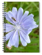Powder Blue Chicory Spiral Notebook
