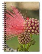 Powder Puff Spiral Notebook