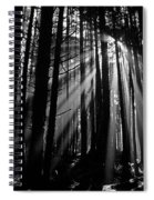 Prairie Creek Redwwod State Park  Spiral Notebook