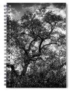 Prairie Oak Spiral Notebook