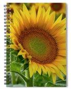 Praising The Sun Spiral Notebook