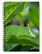 Praying Mantis-2 Spiral Notebook