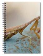 Praying Mantis Close Up Spiral Notebook