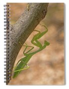 Praying Mantis On The Hunt Spiral Notebook