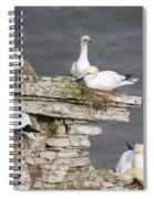 Precarious Nesting Bempton Gannets Spiral Notebook