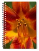 Precious Treasure Spiral Notebook