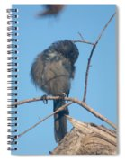 Preening Scrub Jay Spiral Notebook
