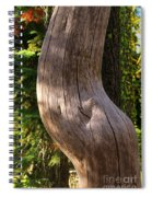 Pregnant Tree Spiral Notebook