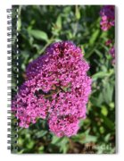 Pretty Blooming Pink Phlox Flowers In A Garden Spiral Notebook