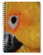 Pretty Girl Spiral Notebook