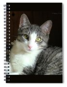Pretty Girl Kitty Spiral Notebook