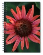 Pretty In Coral Spiral Notebook