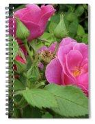 Pretty In Pink 3 Spiral Notebook