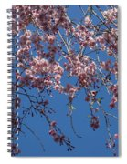 Pretty In Pink - A Flowering Cherry Tree And Blue Spring Sky Spiral Notebook