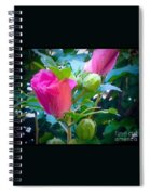 Pretty In Pink Hibiscus Flowers And Buds Spiral Notebook