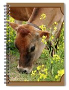 Pretty Jersey Cow Square Spiral Notebook