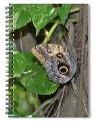 Pretty Morpho Butterfly Resting In A Butterfly Garden  Spiral Notebook