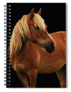 Pretty Palomino Pony Spiral Notebook