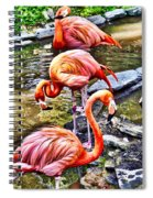 Pretty Pink Flamingos Spiral Notebook