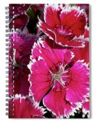Pretty Pinks Spiral Notebook