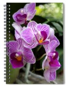 Pretty Purple And White Spiral Notebook