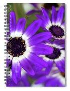 Pretty Purple Daisies Spiral Notebook