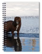 Pretty Reflecting Mink Spiral Notebook