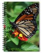 Pretty Spots Spiral Notebook