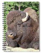 Prim And Proper Bison Spiral Notebook