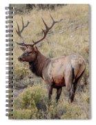 Prize Bull Elk Spiral Notebook