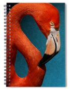 Profile Of An American Flamingo Spiral Notebook