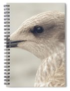Profile Of Juvenile Seagull Spiral Notebook