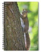 Prolonged Gaze Spiral Notebook